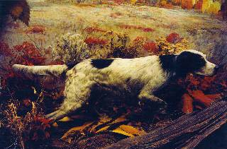 Count Noble Llewellin Setter